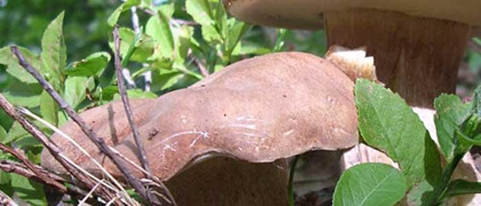 Ricette di stagione – speciale funghi porcini